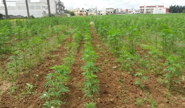 Industrial Hemp: IKHEMP at IndicaSativa Trade in Bologna to Promote Hemp Growing